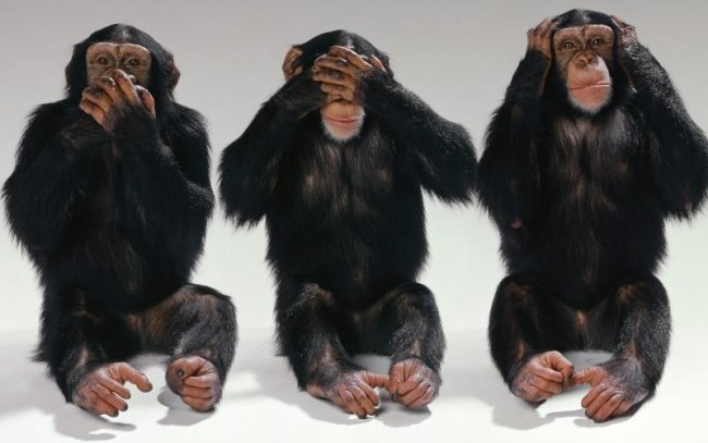 3 Monkeys - Example For Living In Denial